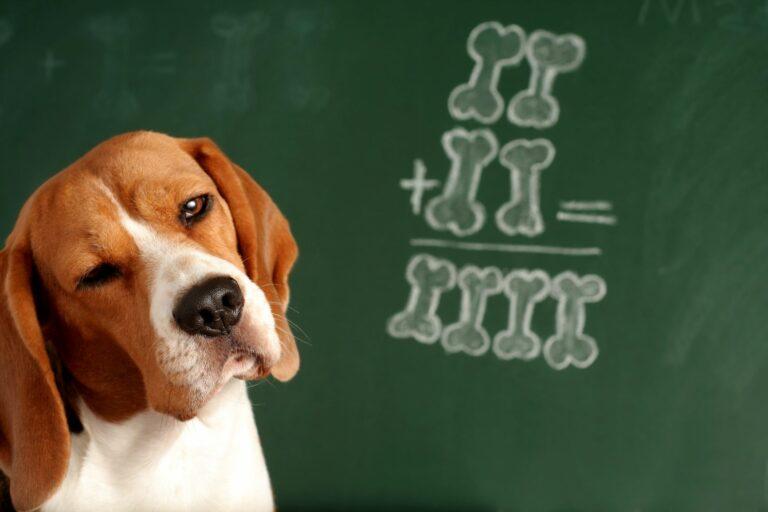 hund vor schultafel mit rechenaufgabe
