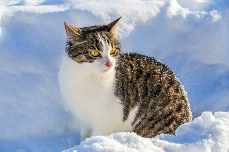 Katze sitzt im Tiefschnee