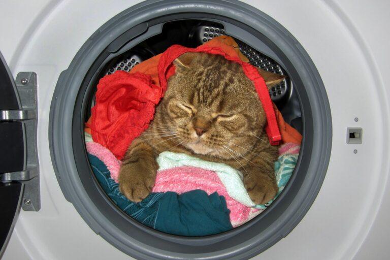 Katze guckt aus Waschmaschinenöffnung