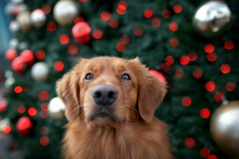 hund sitzt vor geschmücktem weihnachtsbaum