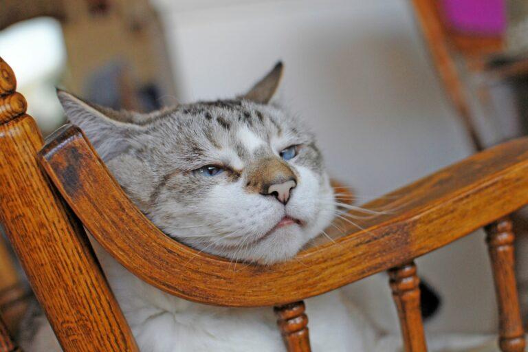 alte katze mit kopf auf stuhllehne