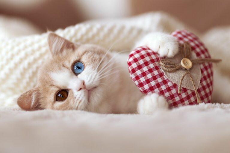 Katze mit Herz zwischen den Pfoten