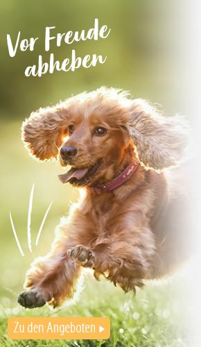 1_centralcampaign_spring_essentials_13042021_magazin_BB_dog