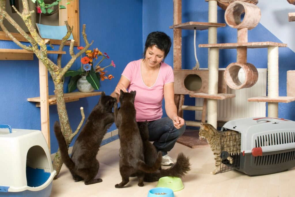 Frau umsorgt Katzen im Katzenhotel