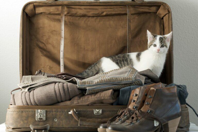 Katze sitzt im Urlaubskoffer